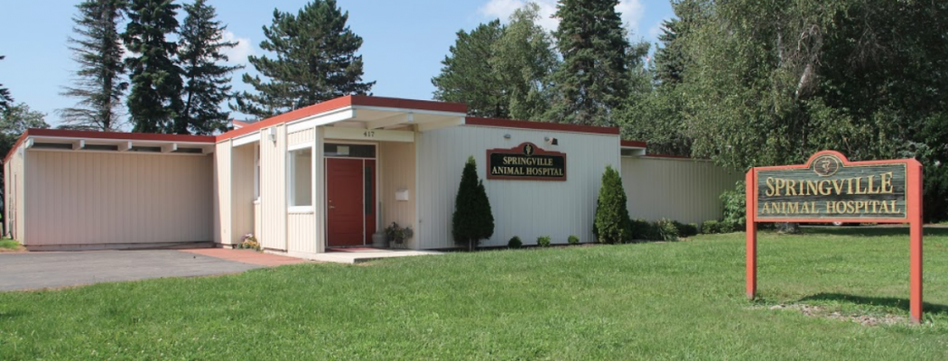 Welcome to Springville Animal Hospital